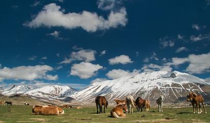 Gruppo di cavalli al pascolo in alta montagna