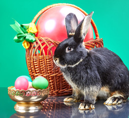 Black Rabbit sits near a vase with colored eggs and a basket with a big red ball