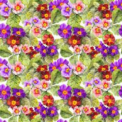 Primrose, primula, flowers. Repeated seamless floral background. Aquarelle