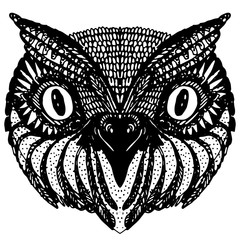 Owl head. Doodle hand drawn on white background.