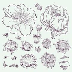 Vector Outline Flowers Sketch Set