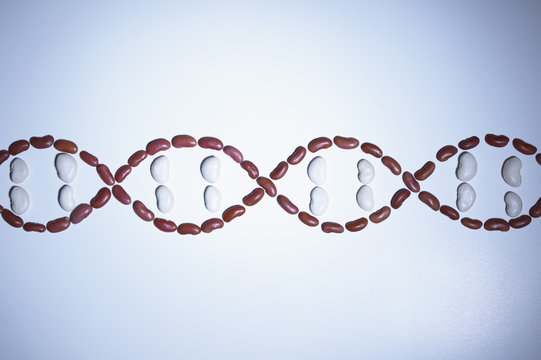 Still life of beans arranged in shape of a DNA strand (plant genetic research)