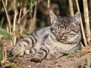 眠る幼い猫