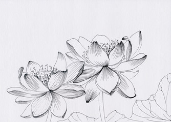 Lotus flower line art ink pen drawing. Original style.