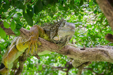 Laying on the branch