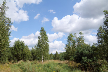 forest landscape with clouds/forest summer landscape with different species of trees and sky in the clouds