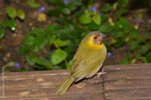 Kleiner Finkenvogel Stockfotos Und Lizenzfreie Bilder Auf Fotolia