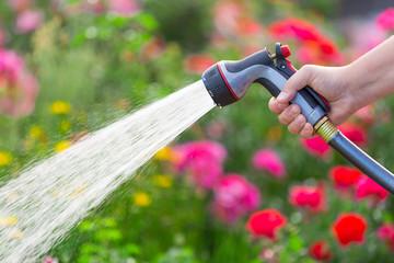 Wall Mural - Watering garden flowers using hose