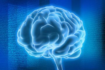Gehirn und digitale Daten 4