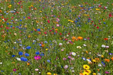 Wall Mural - Sommerblumen, Blumenwiese, Sommer, Flowers