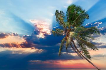 Sunrise and palm trees.