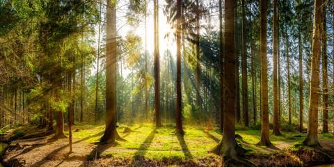 Fototapete - Sonnenaufgang auf einer Lichtung im Wald