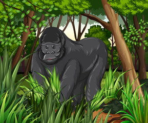 Gorilla living in the jungle