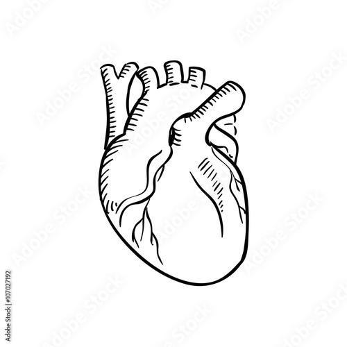 """""""Isolated human heart outline sketch"""" obrazów stockowych i ..."""