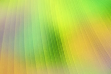 banana leaf close up soft focus in pastel tone, nature background and wallpaper