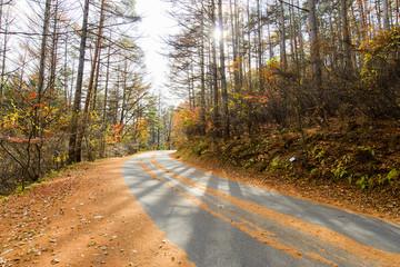 冬の山の中の道路