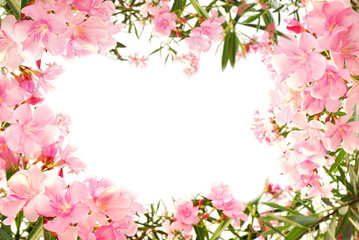 beautiful pink flower border on white isolated background with space for text
