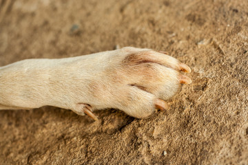 dog feet and legs on the cement ground