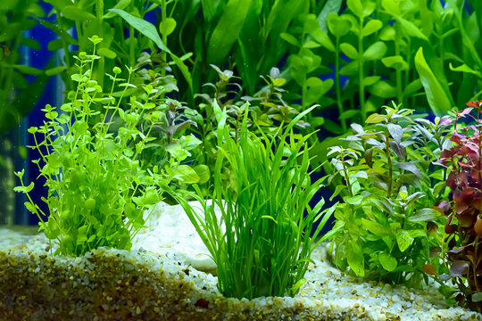 Water plant or aquatic plant or aquatic weed