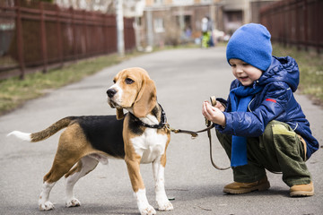 boy walking with a beagle on the street
