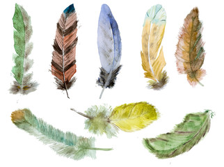 Watercolor vector feathers