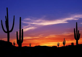 Zelfklevend Fotobehang Arizona Colorful Sunset in Wild West Desert of Arizona with Cactus