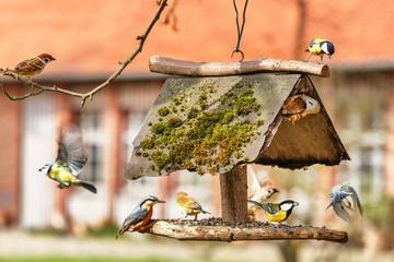 Fototapeta premium Traffic at the Bird Feeder