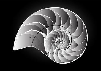 Golden section on shell vector