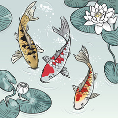 Koi-fish among water-lilys
