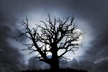 oak tree with moon