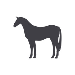 Black Horse isolated on a white background.