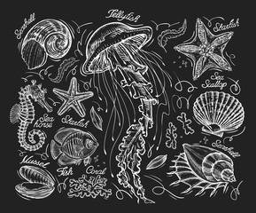 Hand drawn sketch jellyfish, starfish, scallop, conch, coral, mussel, fish, sea horse. Vector illustration