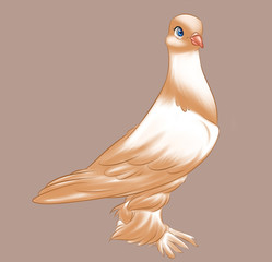 Purebred dove brown bird cartoon illustration animal character