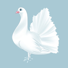 Purebred dove white bird cartoon illustration animal character