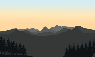Gray mountain and spruce silhouette