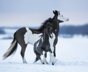 Wall Mural - Mare whit blue-eyed foal on snowfield