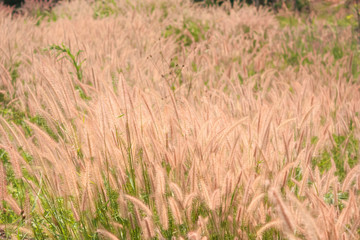 Flower grass impact sunlight.