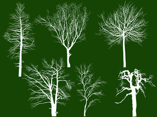 six bare isolated tree white silhouettes