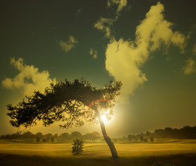 Tree in a golf course during sunrise