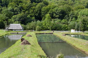 Trout fish farm in Carpathians, Ukraine.
