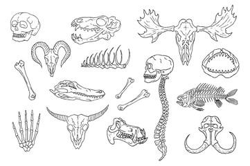 Diverse Skulls and Bones Set. Isolated on white background.