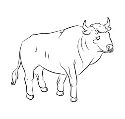 black and white image of a bull