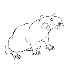 black and white rat image