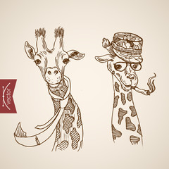 Giraffe head hipster style engraving lineart vintage vector
