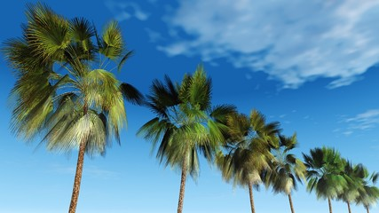 Mexican palm trees against the sky, tropical panorama, 3D rendering.