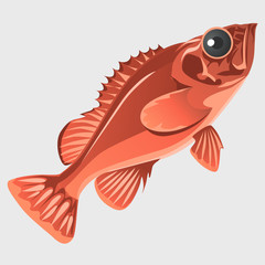 Image of the fish isolated in flat style