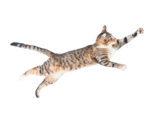 Funny cat flying in the air isolated on white