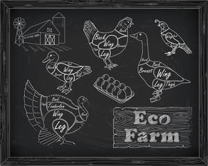 beautiful scheme cutting chicken turkey duck goose quail on the