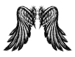 Wings isolated on white background,
