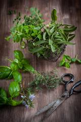 Herbs with vintage garden scissors